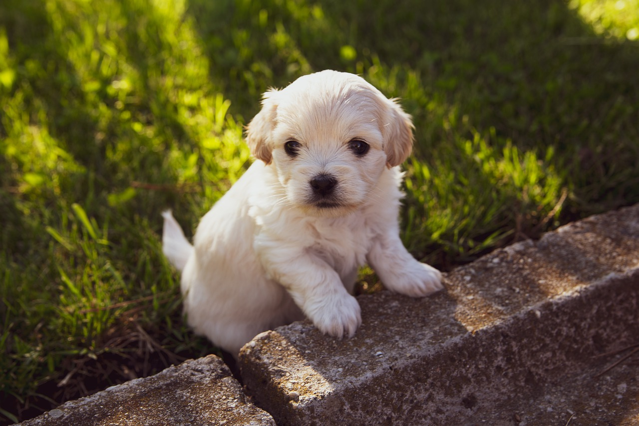 Puppies become more popular
